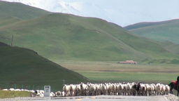 Herd of sheep on Chinese road Footage