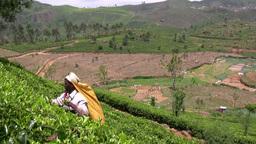 Tea picker in Sri Lanka at work Stock Video Footage
