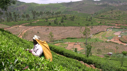Tea picker in Sri Lanka at work Stock Video Footage