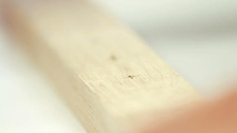 Working carpenter Stock Video Footage