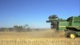 Harvesting a Swathed Canola Crop Driving By Stock Video Footage