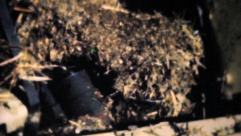 Old Car Damaged From A Flood 1948 Vintage 8mm Stock Video Footage