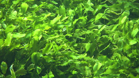 Seaweed And Sea Algae Live Action