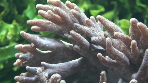 Sea Anemone And Marine Life Stock Video Footage