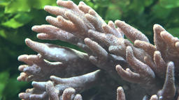 Sea Anemone And Marine Life Footage