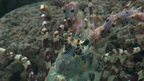 Crayfish And Sea Life Stock Video Footage