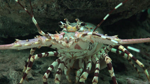Crayfish And Marine Animals Footage
