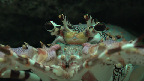 Crayfish And Marine Life Footage