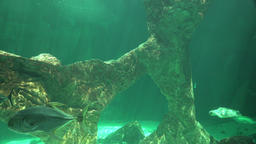 Undersea Ocean Bottom And Marine Life Live Action