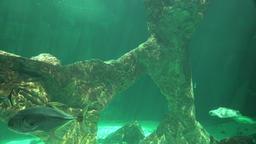 Undersea Ocean Bottom And Marine Life Footage