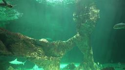 Underwater Sea Or Ocean Live Action