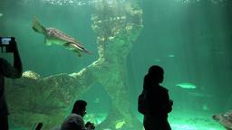 Tourists And Photographers At Aquarium Footage