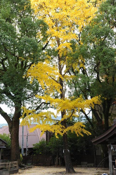 Feng Yuji Shrine Spot Japan Fotografía