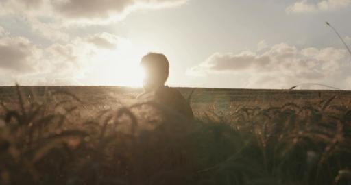 Superhero boy standing in a golden wheat field during sunset Filmmaterial