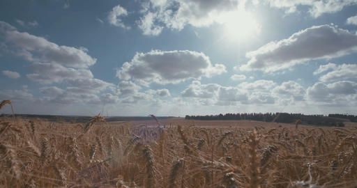 time lapse of clouds over a golden wheat field Footage