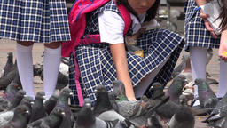 School Girls Feeding Pigeons Live Action