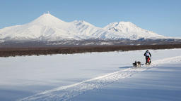 Dog sled racing on background of Kamchatka volcanoes Footage