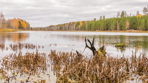 Rotten snag in the pond. Autumn, Russia. Zoom. Time Lapse Footage