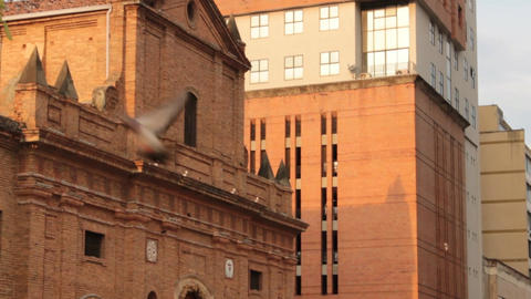 Pigeons Fly At Old Cathedral Footage