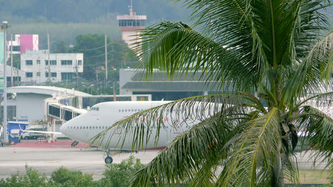 Beautiful landscape with palm tree and airplane drives along airport terminal Footage
