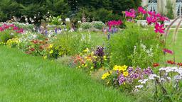 Beautiful flowers in baroque flower garden. Pillnitz,… Stock Video Footage