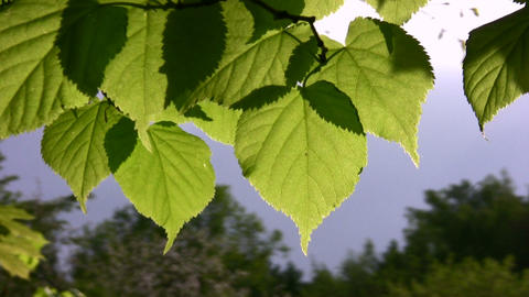 leaf wind Stock Video Footage