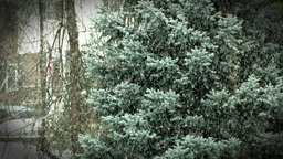 Heavy Winter Snow Fall Against Greenery Background Stock Video Footage