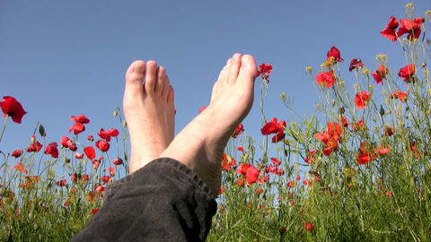 Sky. Poppies. Feet Footage