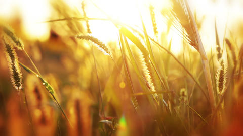 Background with grass and sunshine Stock Video Footage