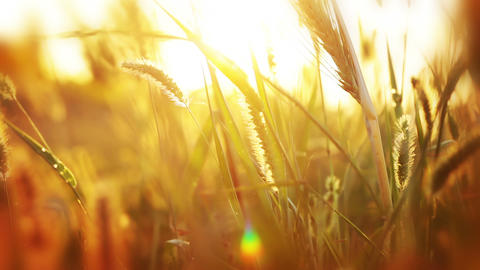 Background With Grass And Sunshine stock footage