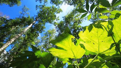 Summer wood Stock Video Footage