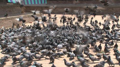 Nepal 126 Footage