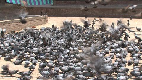 Nepal 126 Stock Video Footage