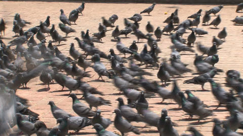Durbar square full of pigeons Stock Video Footage