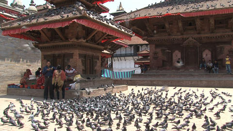 Durbar Square temple full of pigeons Stock Video Footage