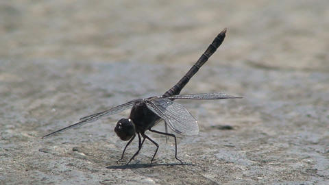 Dragonfly moving his feet and flies away Stock Video Footage