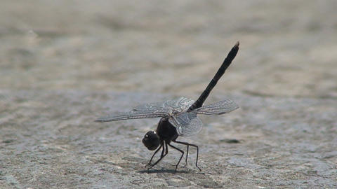 Dragonfly moving his feet Live Action