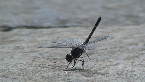 Dragonfly flies away Stock Video Footage