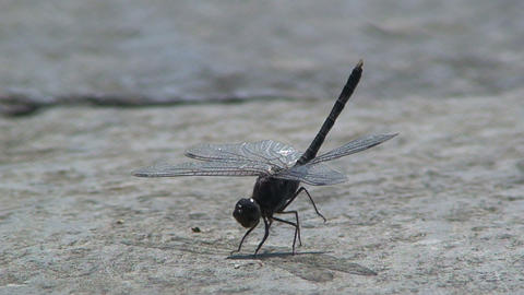 Dragonfly flies away Footage