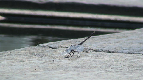 Dragonfly close to the water Stock Video Footage