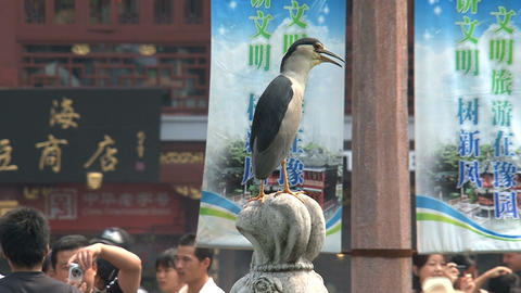 Bird infront of the huxinting tea house Stock Video Footage