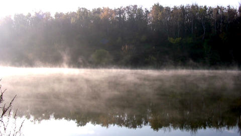 Forest pond. Morning Stock Video Footage