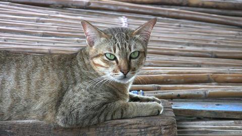 Yawning Slum Cat Stock Video Footage