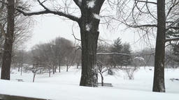 Snow falling in a park Footage