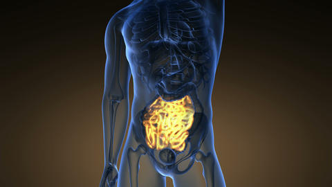 science anatomy scan of human small intestine glowing with yellow Footage