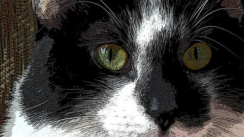 Cat Eyes, cartoon filter, Live Action