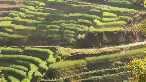 Agricultural Terraces Footage