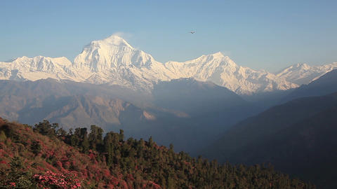 Dhaulagiri Aircraft Rhododendrons Footage