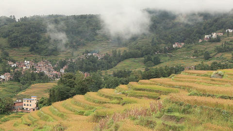 Autumn rice terraces in Yunnan Province, China Footage