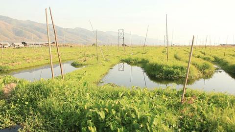 Floating gardens in Inle lake, Myanmar Footage